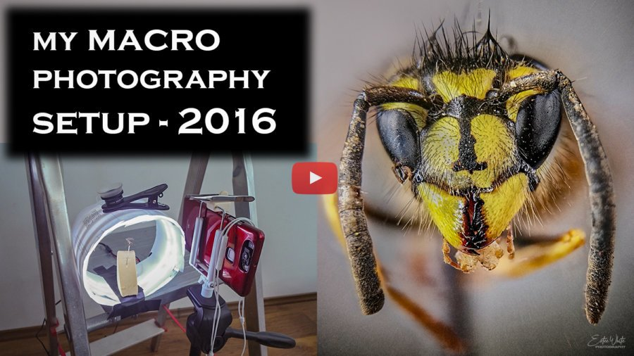 My Focus Stacking Macro Setup in 2016