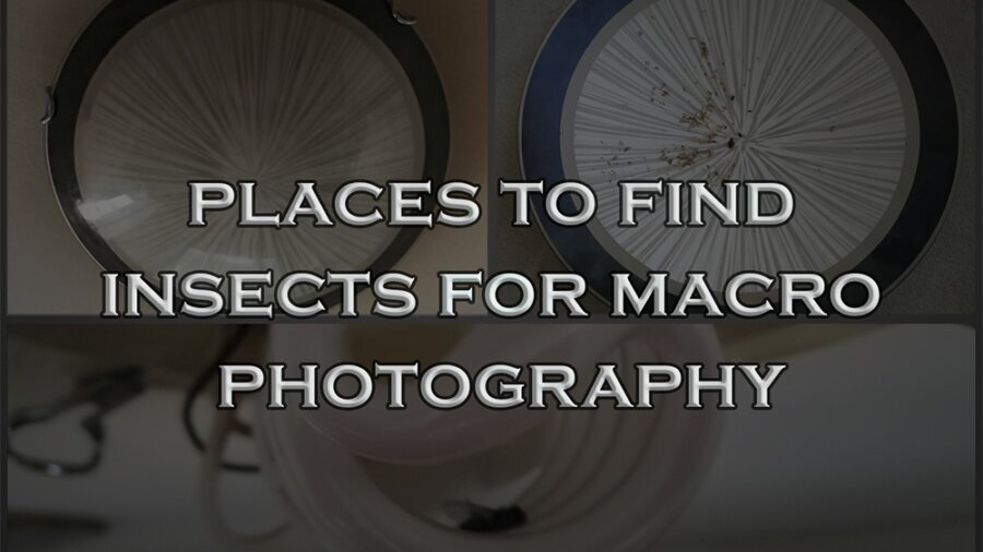 Places to find Insects for Macro Photography
