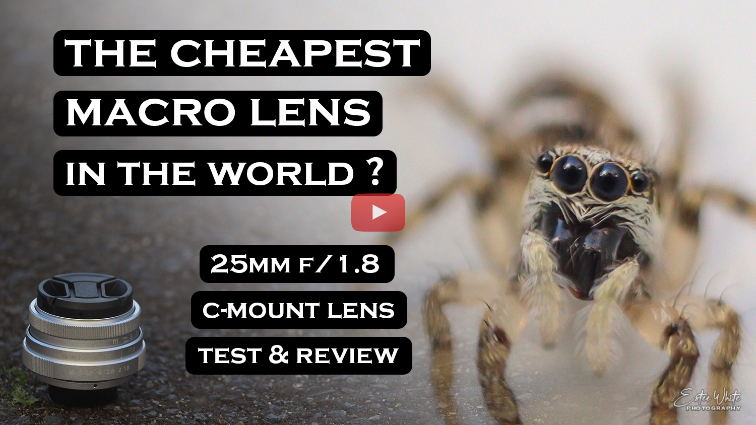 cheapest macro lens in the world estee white photography youtube
