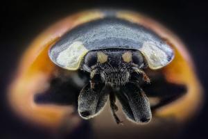 ladybug extreme macro 210 frames